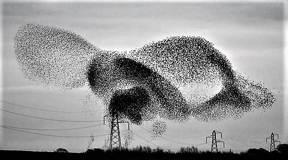 Pájaros-estorinos-1 (2)