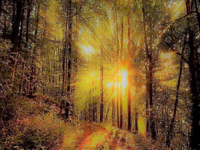bosque-2 (3)